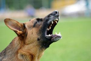 Unzumutbares Hundegebell: Der Nachbar begeht damit eine Ordnungswidrigkeit.